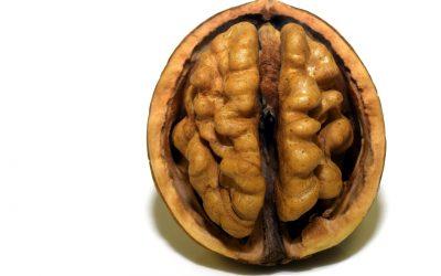 Kinesiologie im Alltag – wie ticken wir?